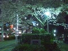 外濠公園の夜桜